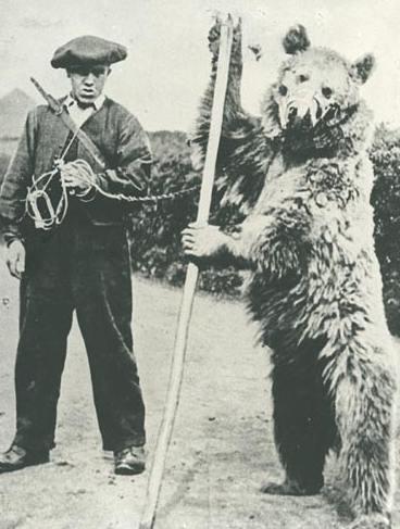 The Bear on the Delhi Road