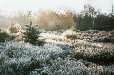 Heather In Winter