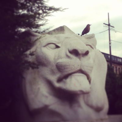 The Lion & The Swallow